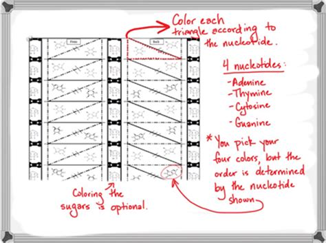 paper dna template origami dna model dna origami tutorial