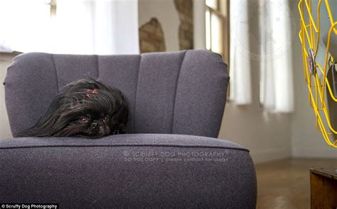 curled up on the sofa canadian photographer captures photos of windswept dogs