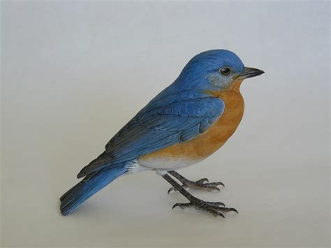 eastern bluebird part one wildfowl carving com