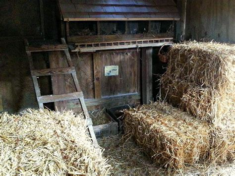 chicken bedding bedding for chickens safe and easy winter coop heat and