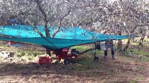 tende per raccolta olive olivspeed ombrello manuale per raccolta olive www