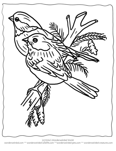 coloring pages of winter birds printable christmas coloring pages birds for wonderweirded