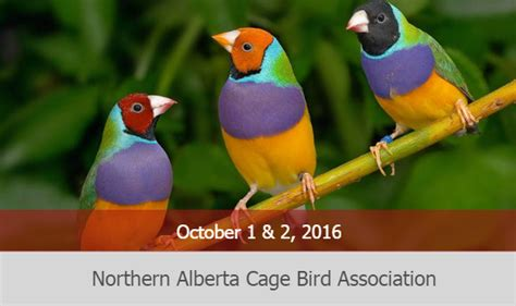 northern alberta cage bird association hari