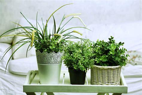 purifier l air d une chambre 5 plantes d int 233 rieur pour d 233 corer la chambre 224 coucher et