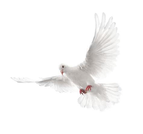 imagenes de palomas blancas en vuelo m 225 s de 25 ideas incre 237 bles sobre tatuajes con palomas