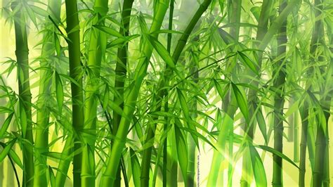 bamboo wallpapers hd group 81