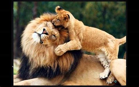 imagenes increibles de animales las mejores fotos de animales en hd youtube
