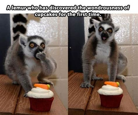 Lemur Meme - funny animal pictures with captions fanphobia