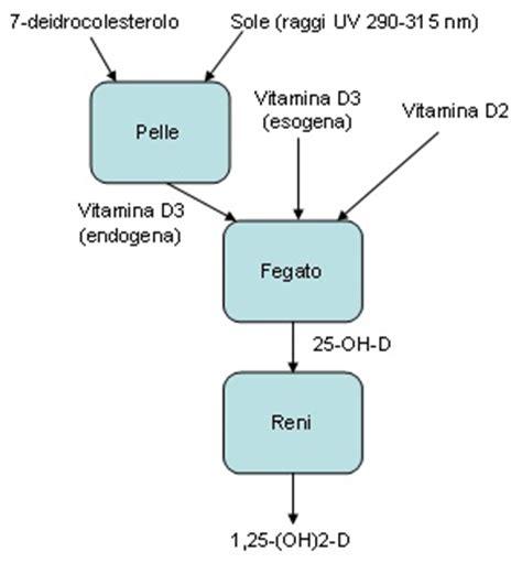 glucosamina negli alimenti vitamina d guida alle vitamine