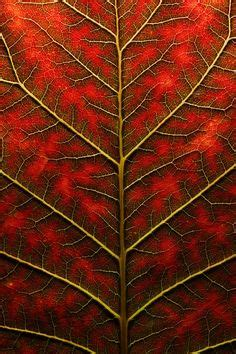 definition of pattern in nature rose leaves photo picture definition at photo dictionary