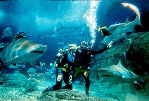 dive shark sea melbourne aquarium buy cheap discount ticket