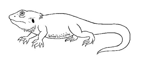 bearded dragon coloring page animals town free bearded