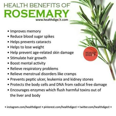 Medicinalcosmetic Uses Of Rosemary by Health Benefits Of Rosemary Medicinals And Edibles