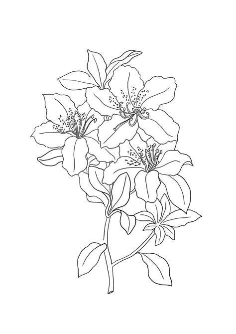 Koleksi Gambar Sketsa Bunga Sederhana