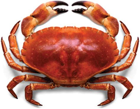animal bon dormeur colombo de crabes cubantilles rhum blanc rhum
