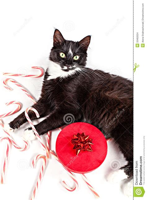 cute cat and christmas gift stock images image 33462024