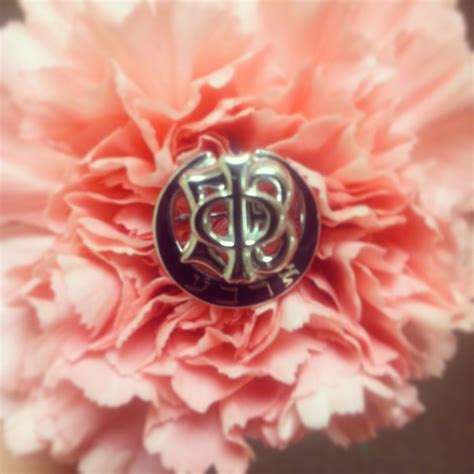 gamma phi beta colors gamma phi beta s flower is the pink carnation the