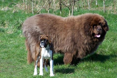 good big house dogs cute big dog breeds pictures dog breeds puppies cute big dog breeds good with kids