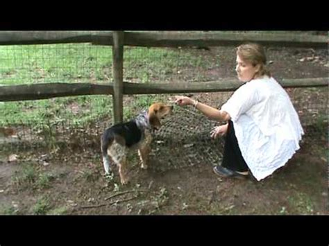how to keep dog in yard realtor lisa patton shows you how to dog proof your fence youtube