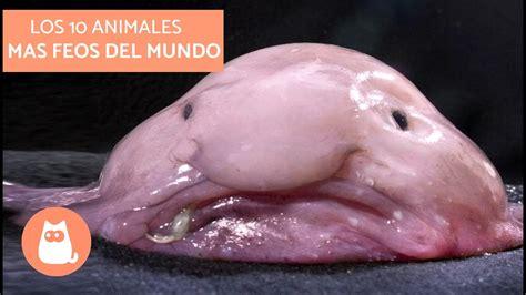 imagenes animales mas feos del mundo los 10 animales mas feos del mundo top 10 world s