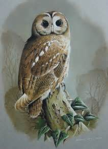gallery for gt owl paintings