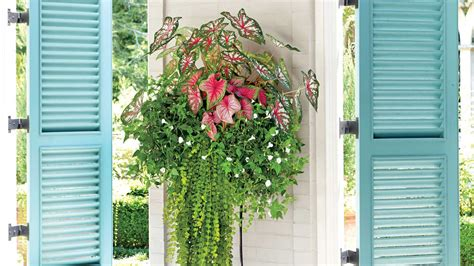 southern living container gardening spectacular container gardening ideas southern living