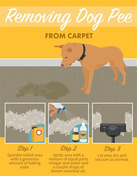 how to clean dog urine from couch best stain removal tricks for your clothes furniture and