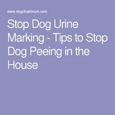 how to stop male dog peeing in house tinklebellz housebreaking as easy as 1 2 pee getting mollie one i want