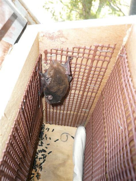 diy bat box nestboxes