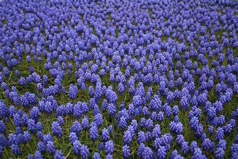 arbusti fioriti perenni piante perenni piante da giardino piante perenni arbusti