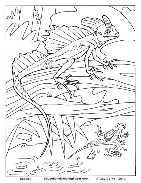 coloring pages lizards lizard pictures to colour az coloring pages