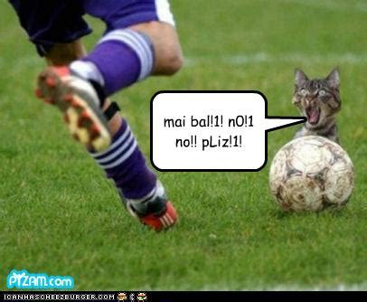 Komik Kolpri Our Field Of No32 cat appears on pitch at anfield during match livens up snoozefest soccerprose