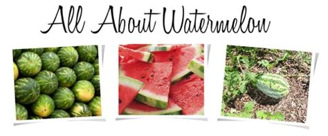 history of the watermelon the earth of india all about watermelon in india