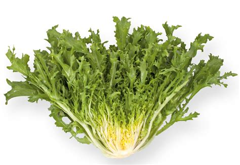 fris 233 e lettuce love my salad