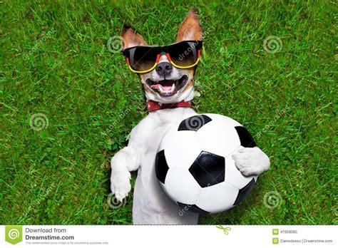 soccer for dogs german soccer