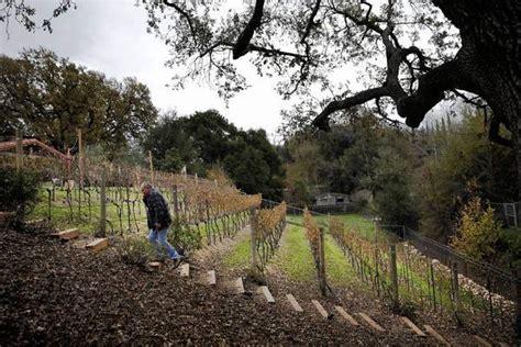 backyard vineyard backyard vineyards take off in santa clarita latimes