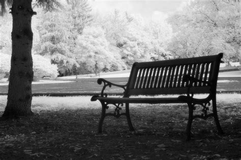 white park bench charleston black and white infrared charleston battery park bench photograph by kathy