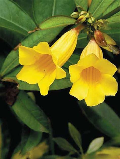 summer plants in sz ii
