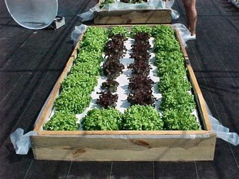Floating Vegetable Garden Build Your Own Floating Hydroponic Garden 187 Gardening In