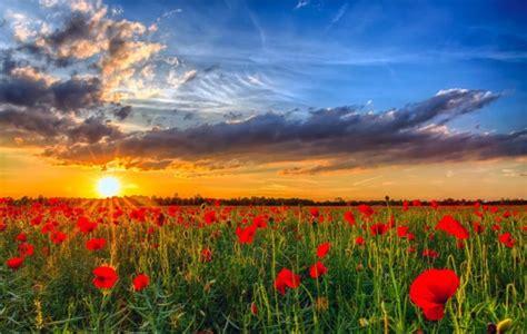 imagenes bonitas de paisajes con flores espectaculares paisajes con flores de colores muy bonitas