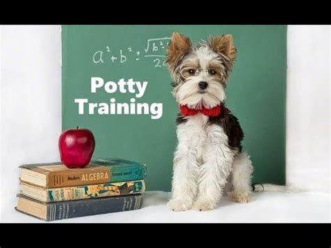 house training a dog fast how to potty train a dog dog house training tips housebreaking dogs fast easy