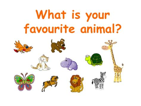 what animal are you what is your favourite animal1