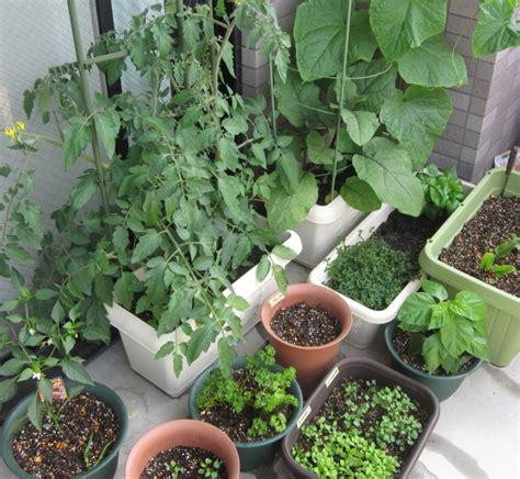 bio garten bio garten auf der eigenen terrasse einrichten