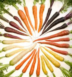 original color of carrots rainbow carrots a royal treat 171 bountiful baskets