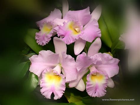 Pictures Of Gardens And Flowers by Pictures Of Flowers Orchids
