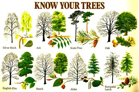 tree types know your trees plants gardens and tree bark