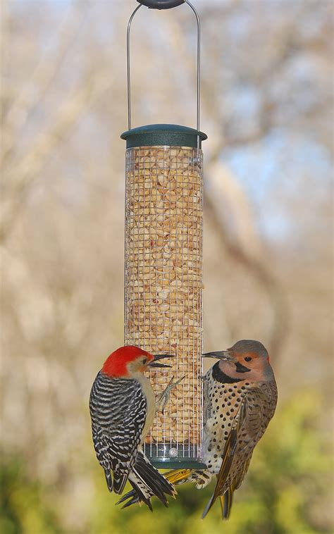 wild birds unlimited tips to keep woodpecker from