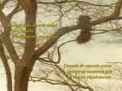 fabula de la avista 9802570990 fabula conejo pajaro