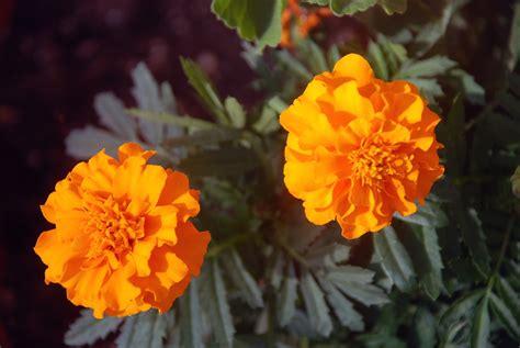 Pdf Flowers Dia De Los Muertos by Dia De Los Muertos Glenrosa Journeys