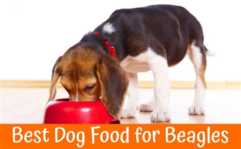 best food for beagles reviews and buyer s guide for the best food for beagles in 2017 us bones